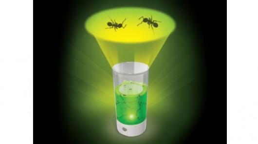 La ferme des fourmis lumineuse, la révolution dans les jouets d'observation des fourmis